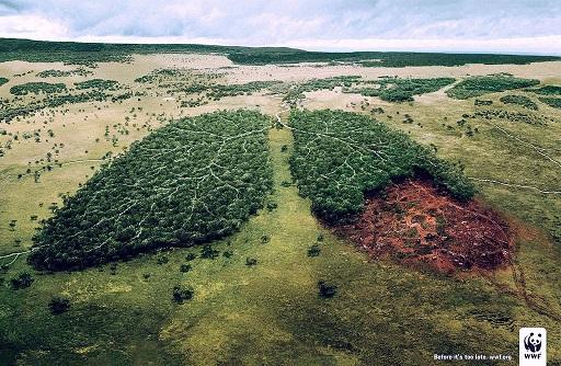 WWF - BRASIL